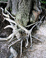 Intertwining Roots